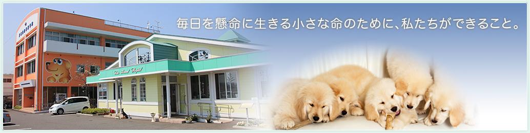仙台 動物 医療 センター